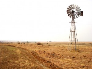 Heilbron- Country Life 091